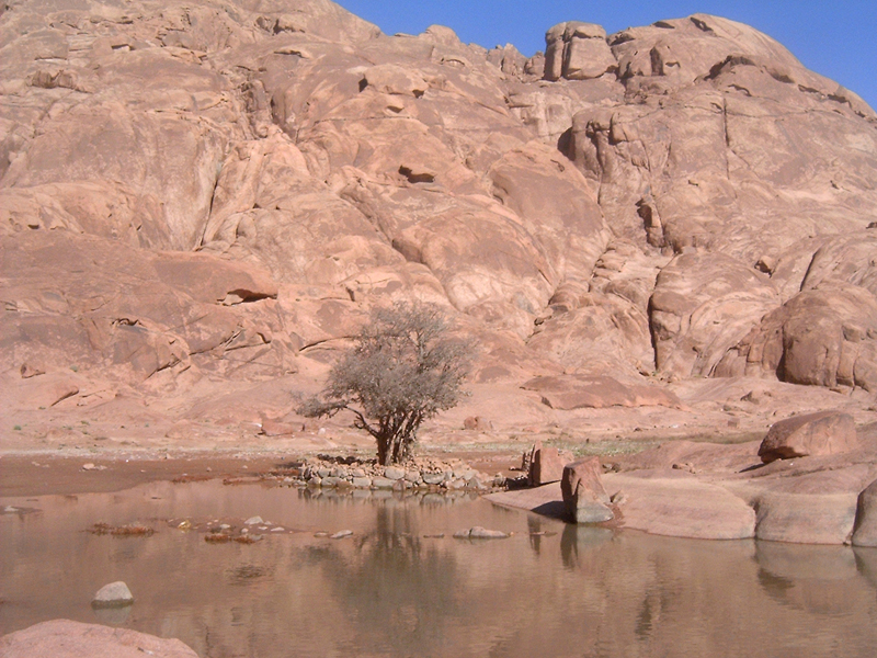 MagPro Photo of the Day:  Was This the Burning Bush, at this Oasis on Mount Sinai?   I don't know, but this bush fits an image that I have in my mind when I hear the story of Moses talking to God when God spoke from a burning bush. 'Exodus 3:2 2And the angel of the LORD appeared unto him in a flame of fire out of the midst of a bush: and he looked, and, behold, the bush burned with fire, and the bush was not consumed.'   Visit MagPro Photos (www.MagPro.org/Photos) for more