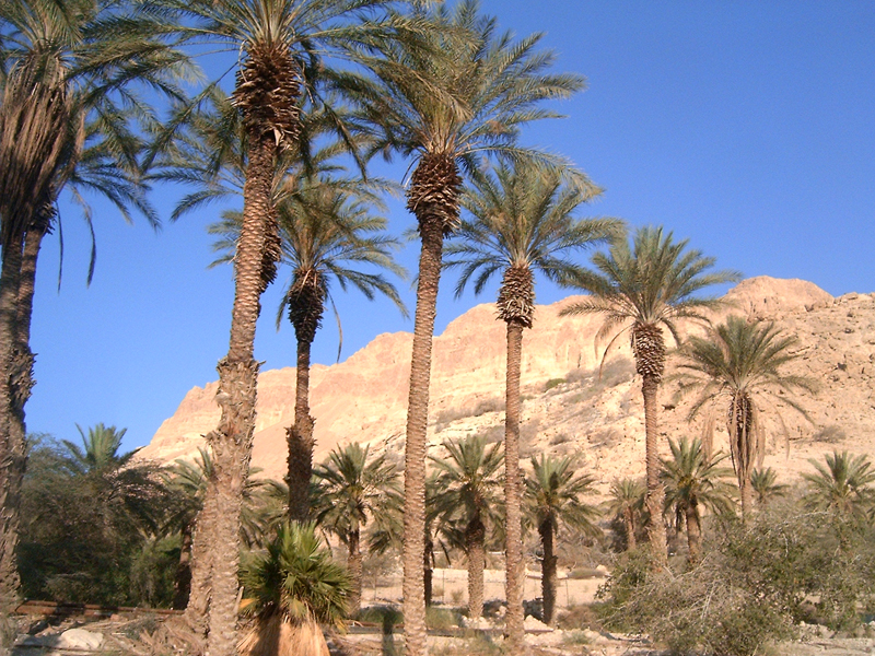 MagPro Photo of the Day: Line those palm trees up  In Ein Gedi, Israel, these palm trees standing at attention in a well formed line.  For more photos, please visit MagPro Photos (www.Photos.MagPro.org)